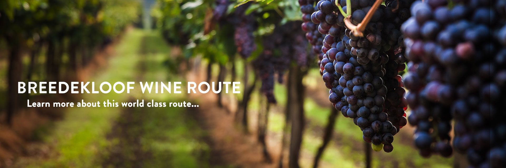Bredekloof wine route